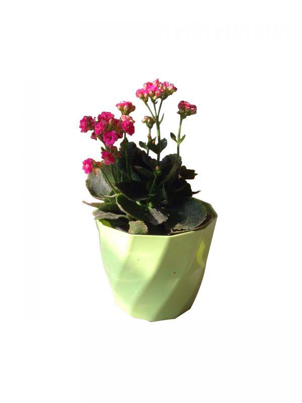 植物与塑料花盆搭配