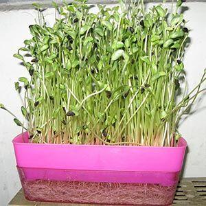 塑料芽苗菜盆直销