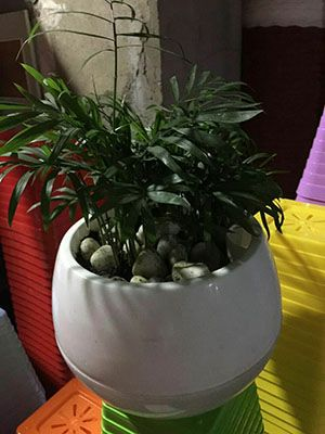 懒人塑料花盆