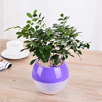 紫色塑料花盆