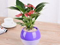 紫色懒人花盆