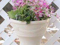 欧风塑料花盆